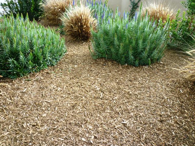Natural Woodchips